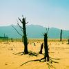 Image of barren desert