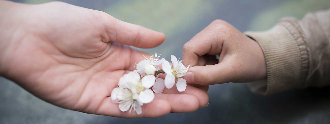 A little hand gives a twig of cherry blossoms to an adult hand