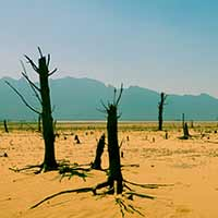image of dry desert with dead trees