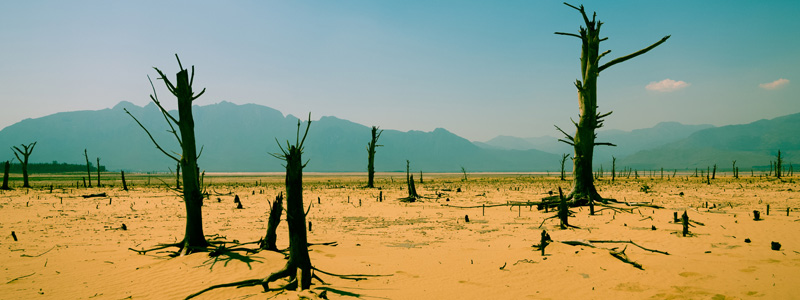 Image of Cape Town desert parched earth and dead trees
